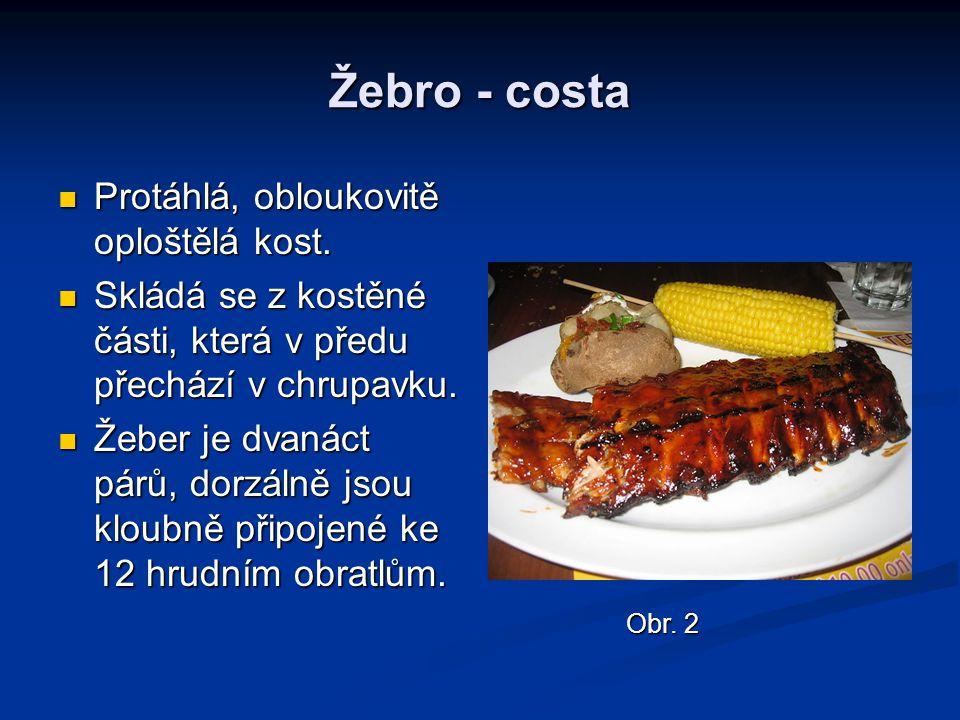 Žebro - costa Protáhlá, obloukovitě oploštělá kost.