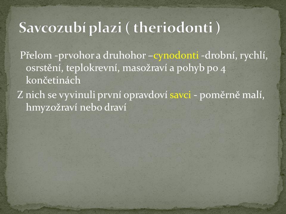 Savcozubí plazi ( theriodonti )