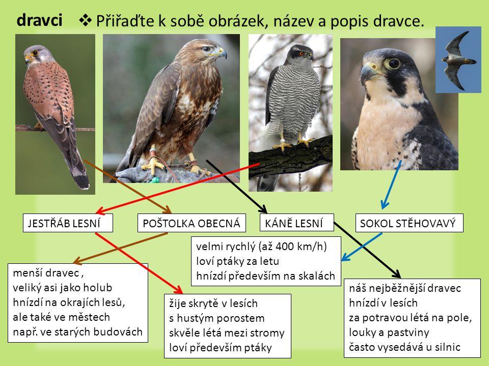 dravci Přiřaďte k sobě obrázek, název a popis dravce. JESTŘÁB LESNÍ