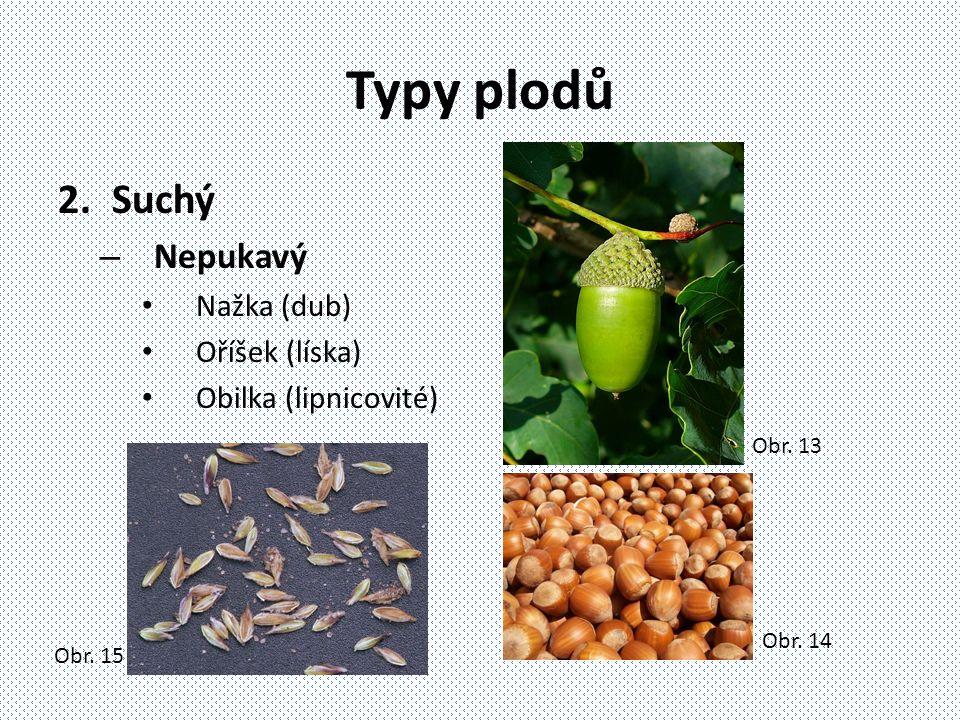Typy plodů Suchý Nepukavý Nažka (dub) Oříšek (líska)