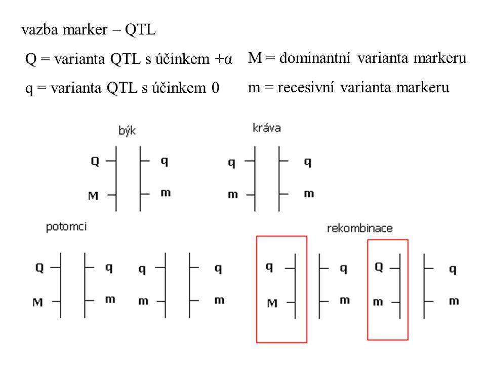 vazba marker – QTL Q = varianta QTL s účinkem +α. q = varianta QTL s účinkem 0. M = dominantní varianta markeru.