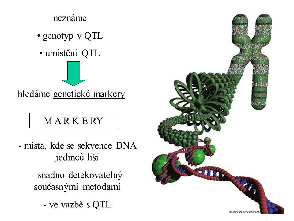 hledáme genetické markery