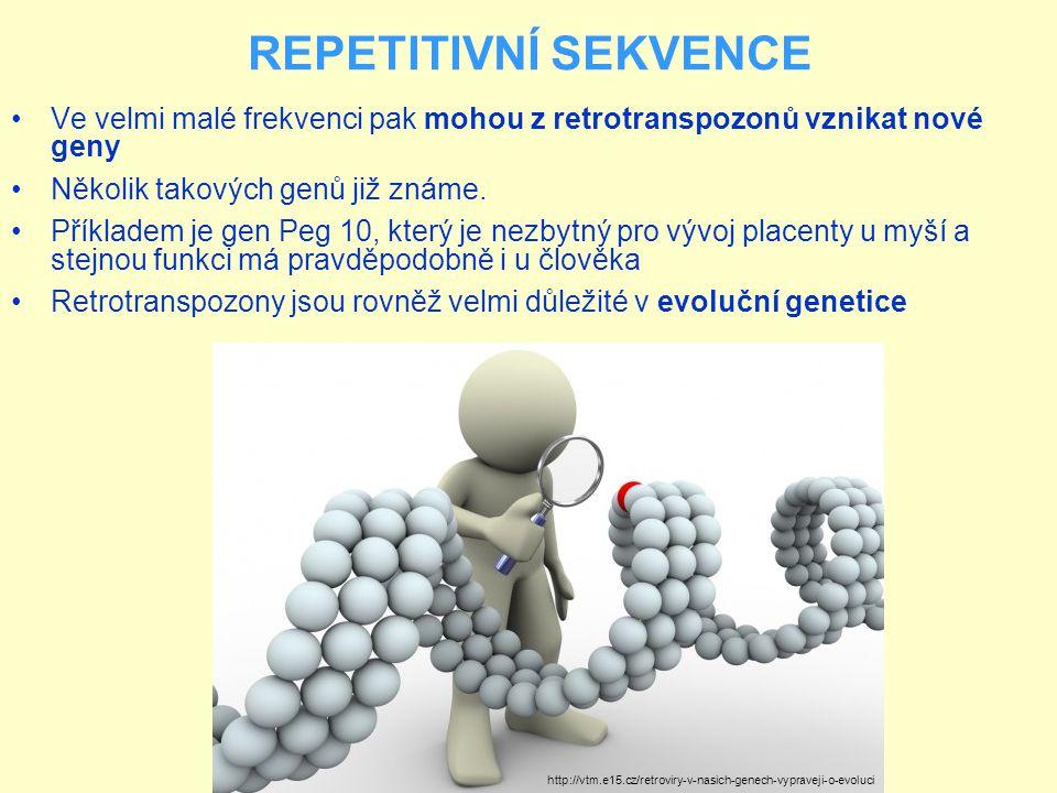REPETITIVNÍ SEKVENCE Ve velmi malé frekvenci pak mohou z retrotranspozonů vznikat nové geny. Několik takových genů již známe.