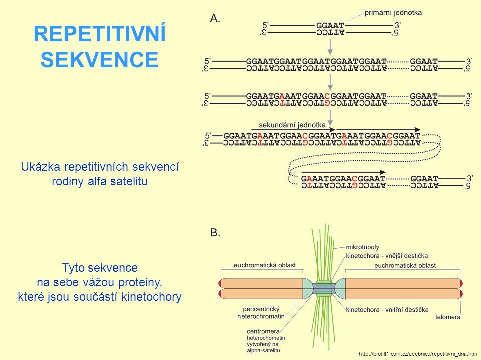 REPETITIVNÍ SEKVENCE Ukázka repetitivních sekvencí