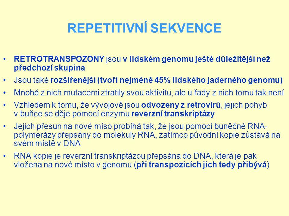 REPETITIVNÍ SEKVENCE RETROTRANSPOZONY jsou v lidském genomu ještě důležitější než předchozí skupina.