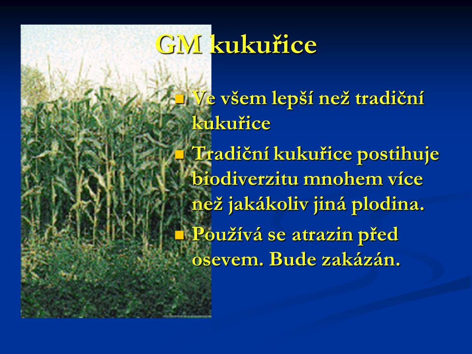 GM kukuřice Ve všem lepší než tradiční kukuřice