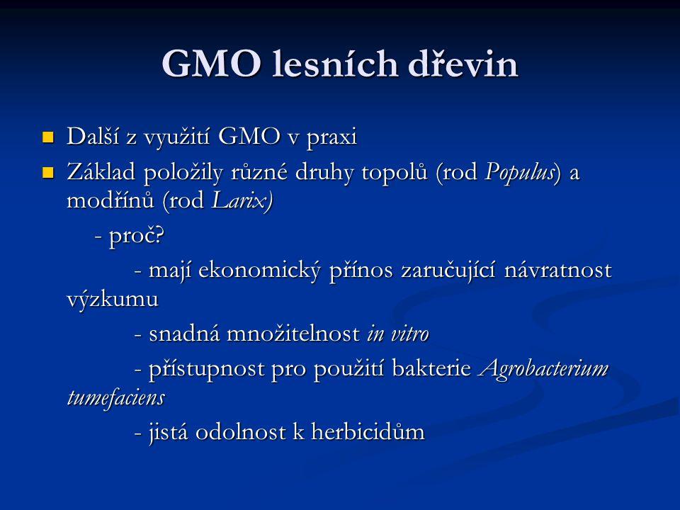 GMO lesních dřevin Další z využití GMO v praxi