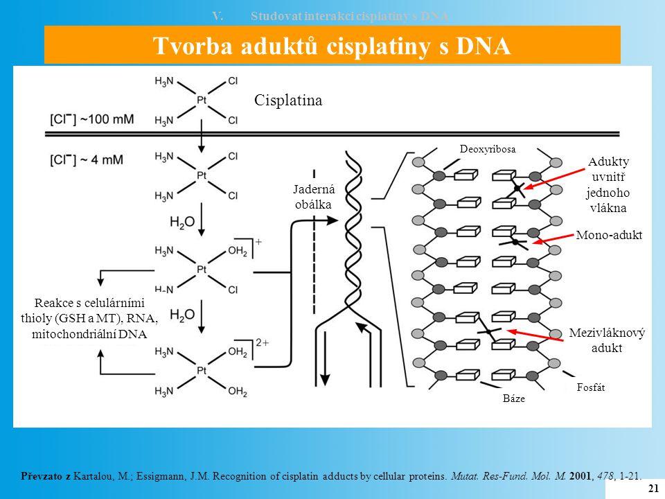 V. Studovat interakci cisplatiny s DNA Tvorba aduktů cisplatiny s DNA