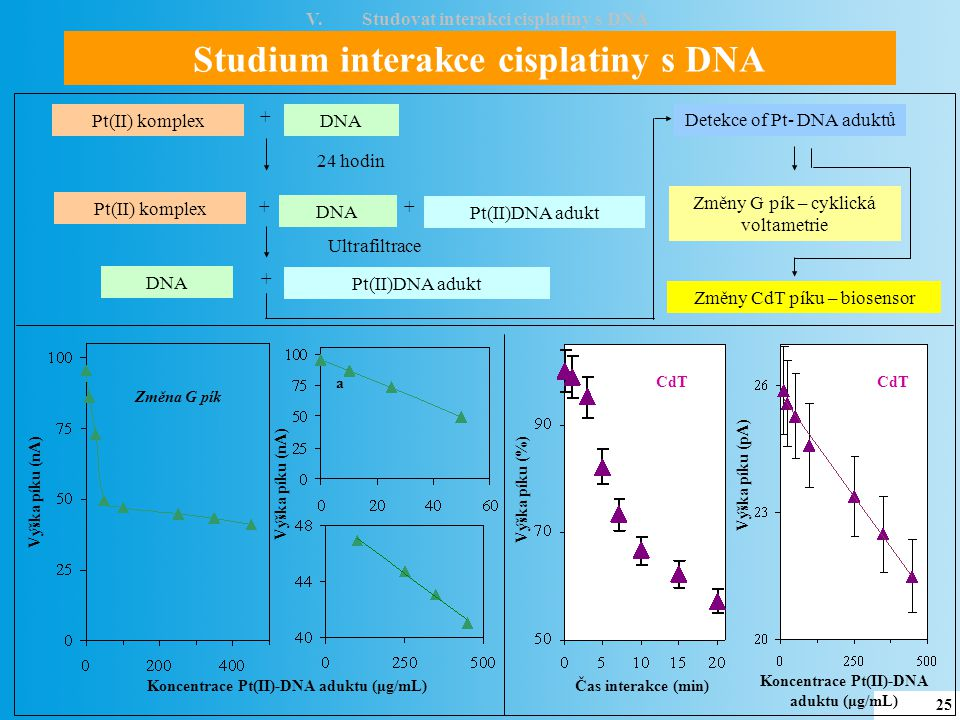 Studium interakce cisplatiny s DNA