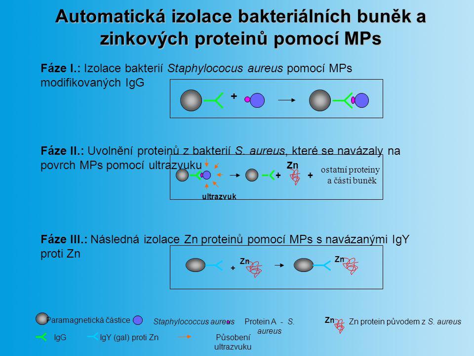 Automatická izolace bakteriálních buněk a zinkových proteinů pomocí MPs