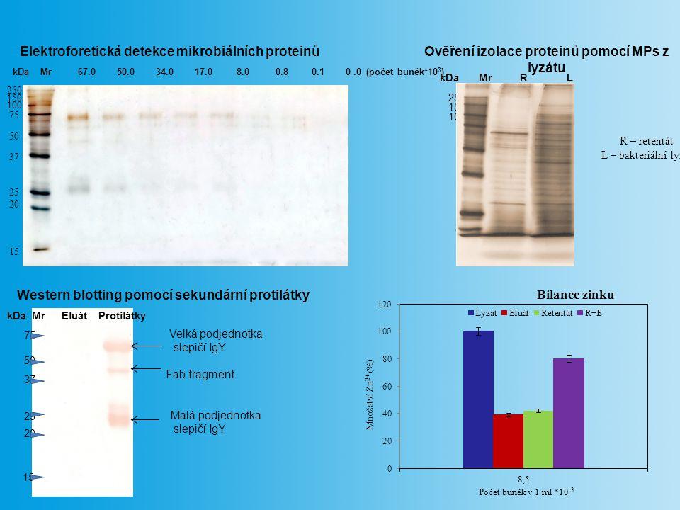 Elektroforetická detekce mikrobiálních proteinů