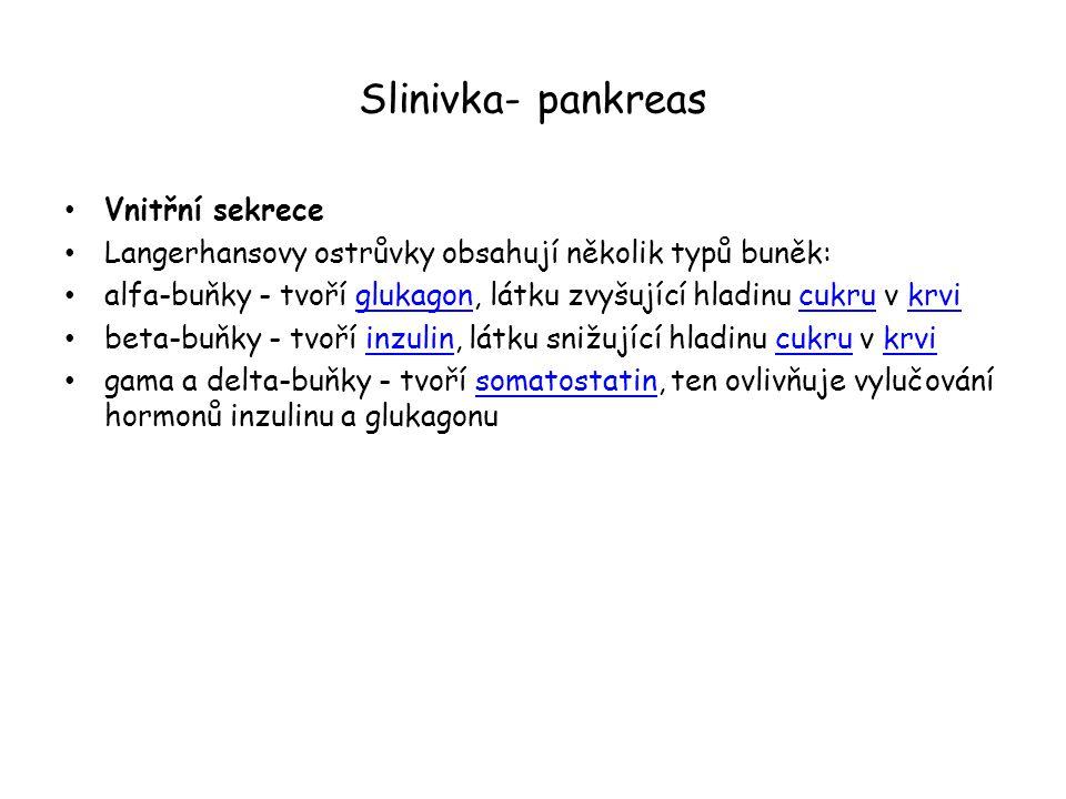 Slinivka- pankreas Vnitřní sekrece