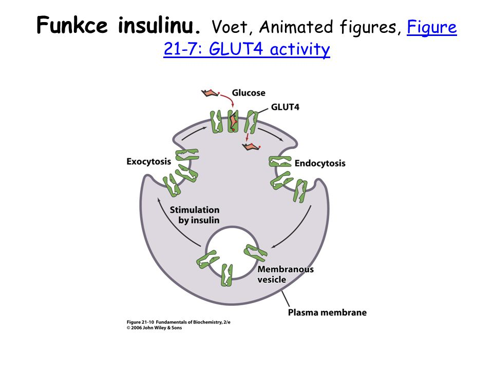 Funkce insulinu. Voet, Animated figures, Figure 21-7: GLUT4 activity