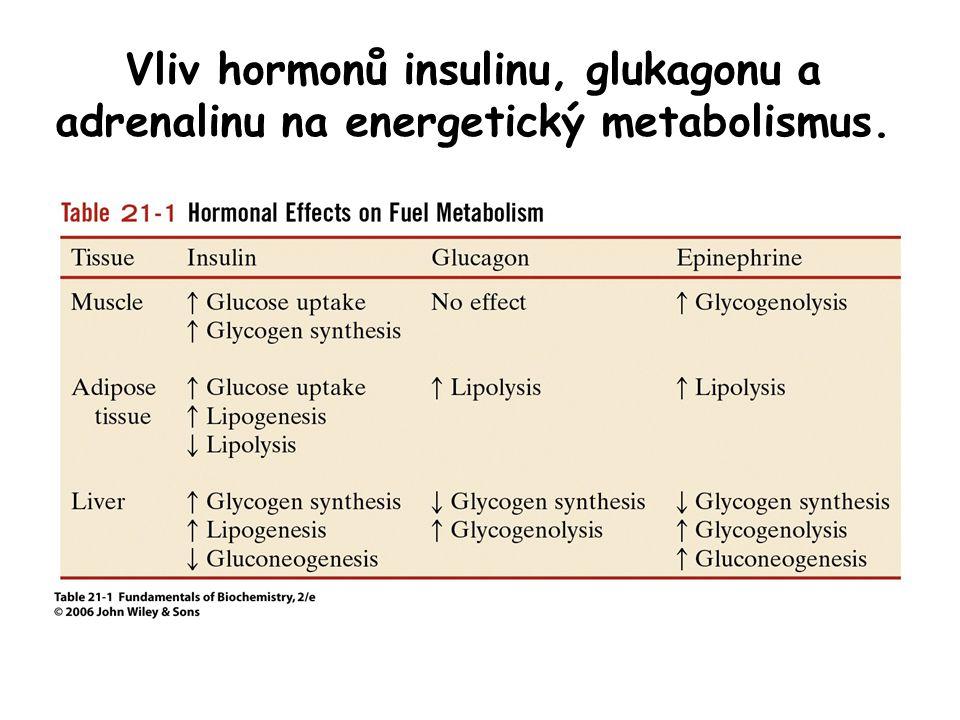 Vliv hormonů insulinu, glukagonu a adrenalinu na energetický metabolismus.