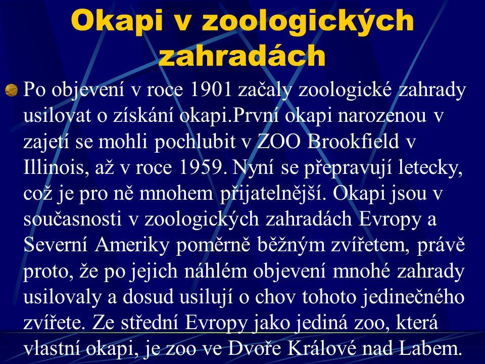 Okapi v zoologických zahradách