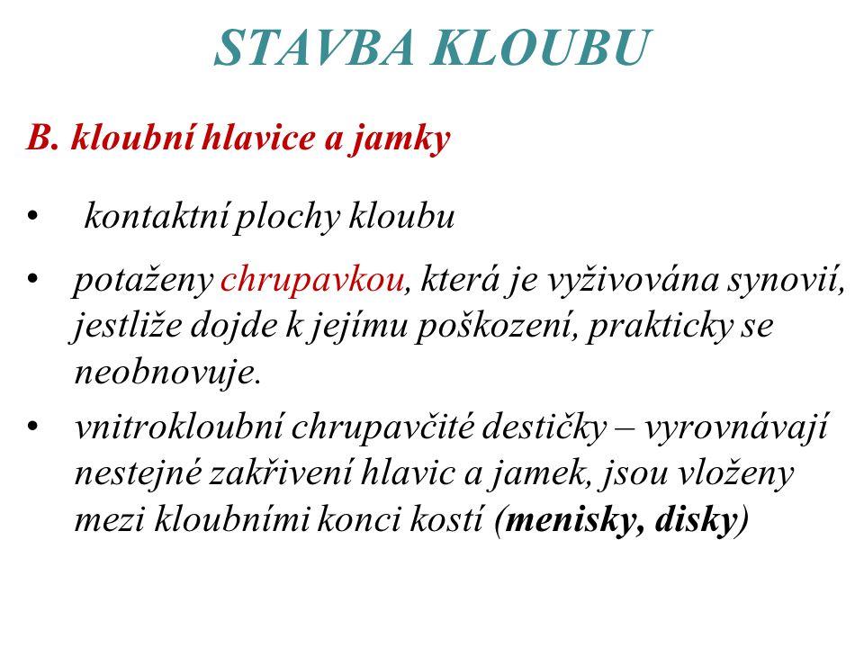 STAVBA KLOUBU B. kloubní hlavice a jamky kontaktní plochy kloubu
