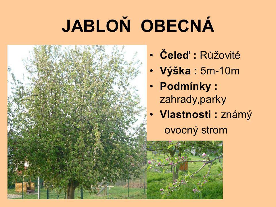 JABLOŇ OBECNÁ Čeleď : Růžovité Výška : 5m-10m Podmínky : zahrady,parky