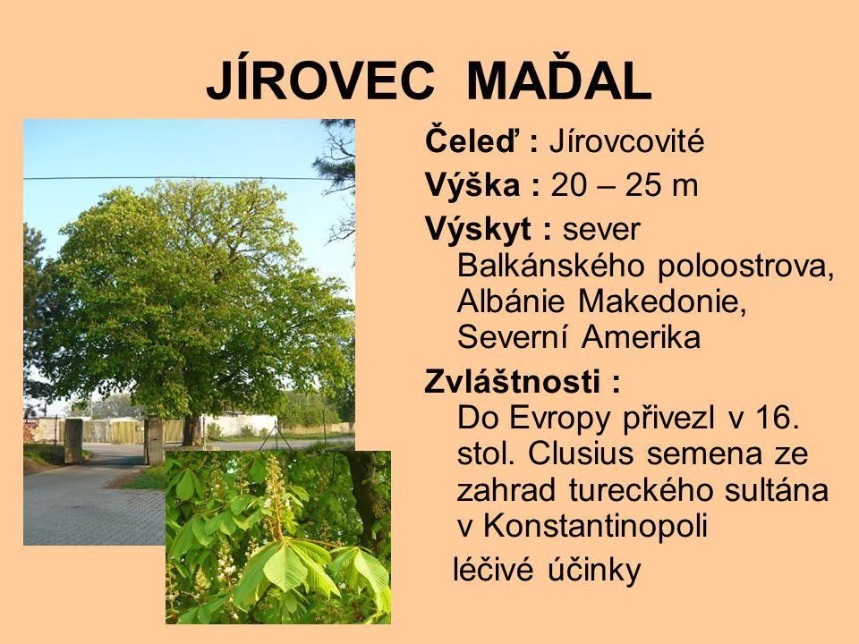 JÍROVEC MAĎAL Čeleď : Jírovcovité Výška : 20 – 25 m