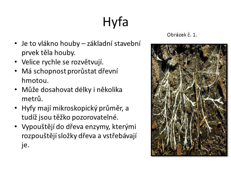 Hyfa Je to vlákno houby – základní stavební prvek těla houby.