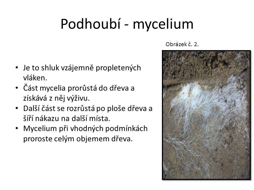 Podhoubí - mycelium Je to shluk vzájemně propletených vláken.