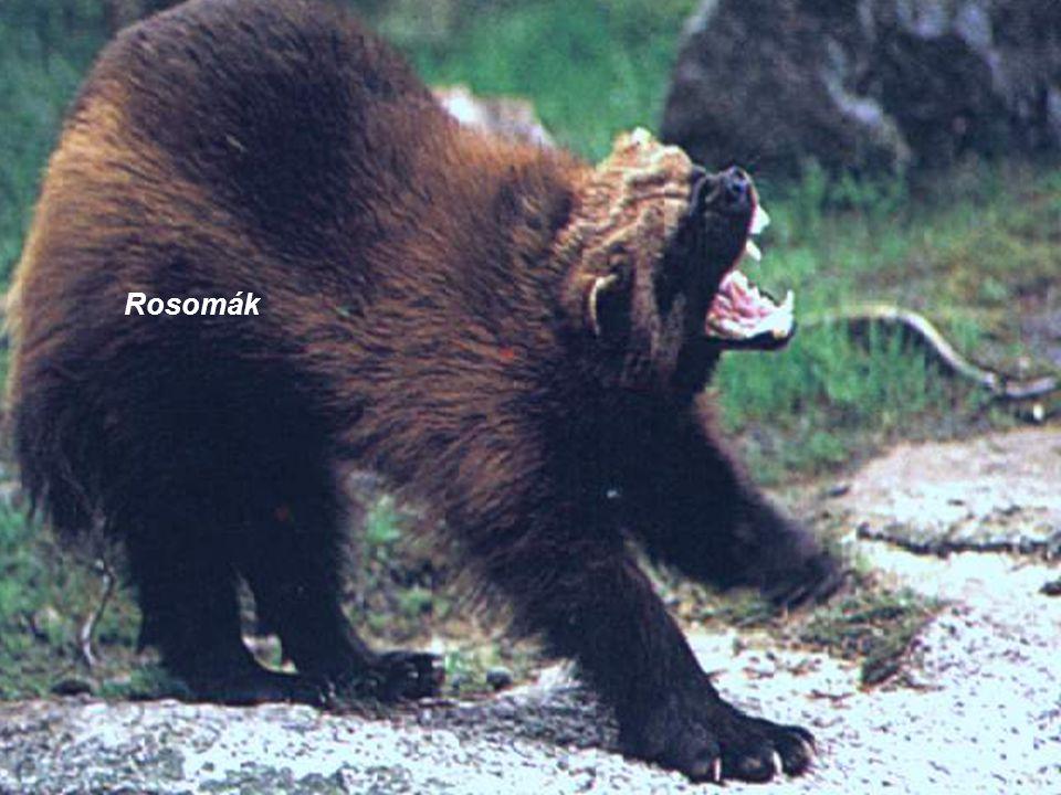 Rosomák