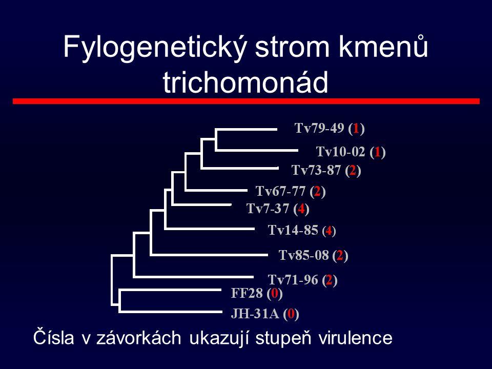 Fylogenetický strom kmenů trichomonád