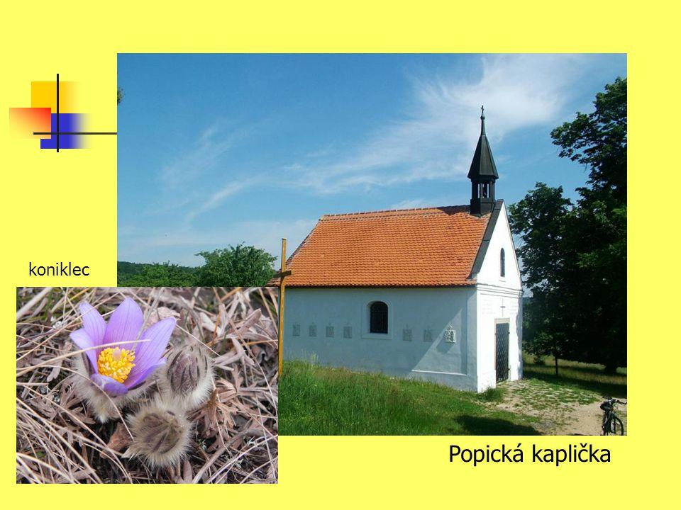 koniklec Popická kaplička