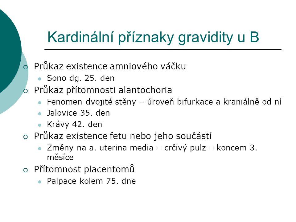 Kardinální příznaky gravidity u B