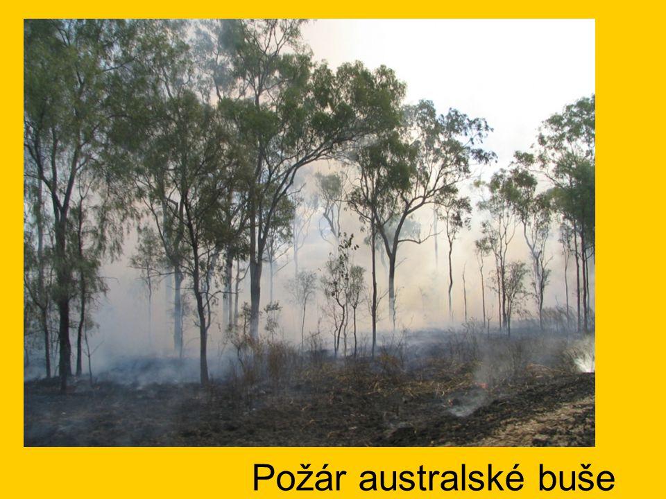 Požár australské buše