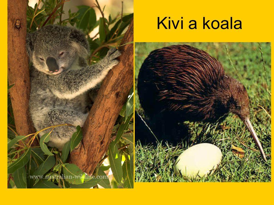 Kivi a koala