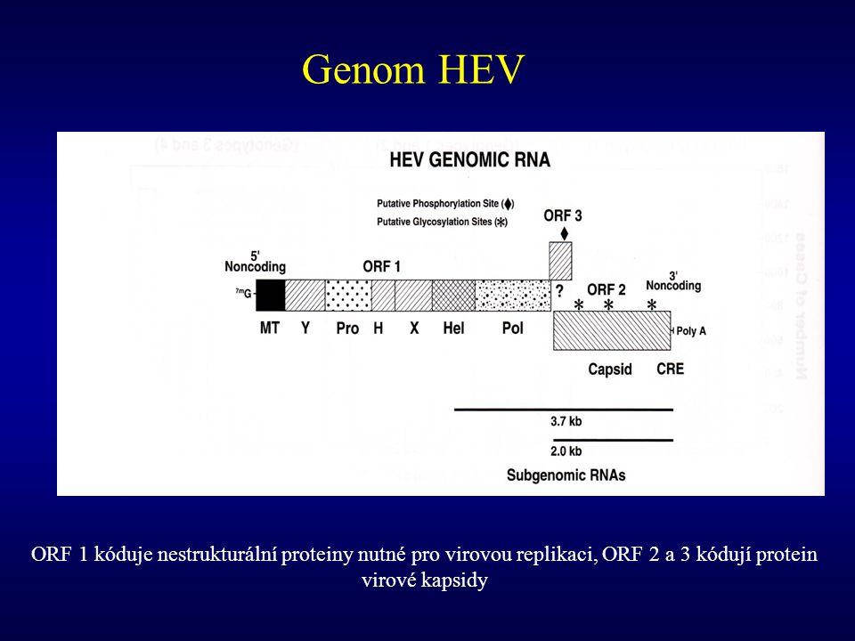 Genom HEV ORF 1 kóduje nestrukturální proteiny nutné pro virovou replikaci, ORF 2 a 3 kódují protein virové kapsidy.