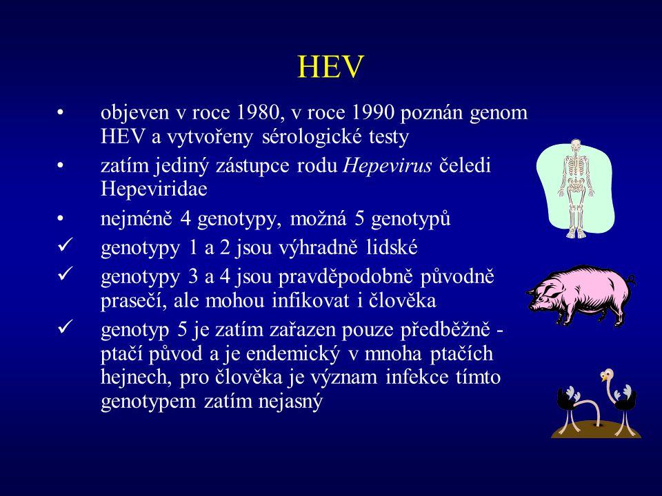 HEV objeven v roce 1980, v roce 1990 poznán genom HEV a vytvořeny sérologické testy. zatím jediný zástupce rodu Hepevirus čeledi Hepeviridae.