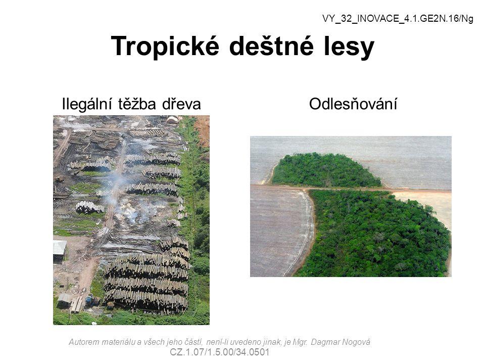Tropické deštné lesy Ilegální těžba dřeva Odlesňování