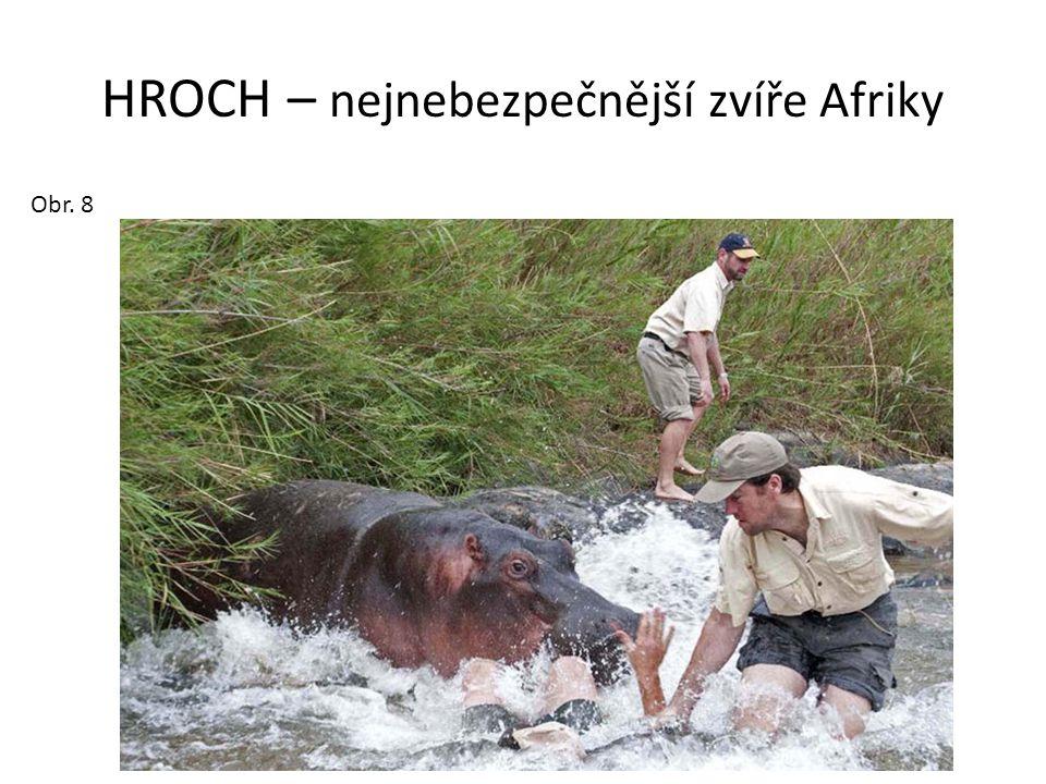 HROCH – nejnebezpečnější zvíře Afriky