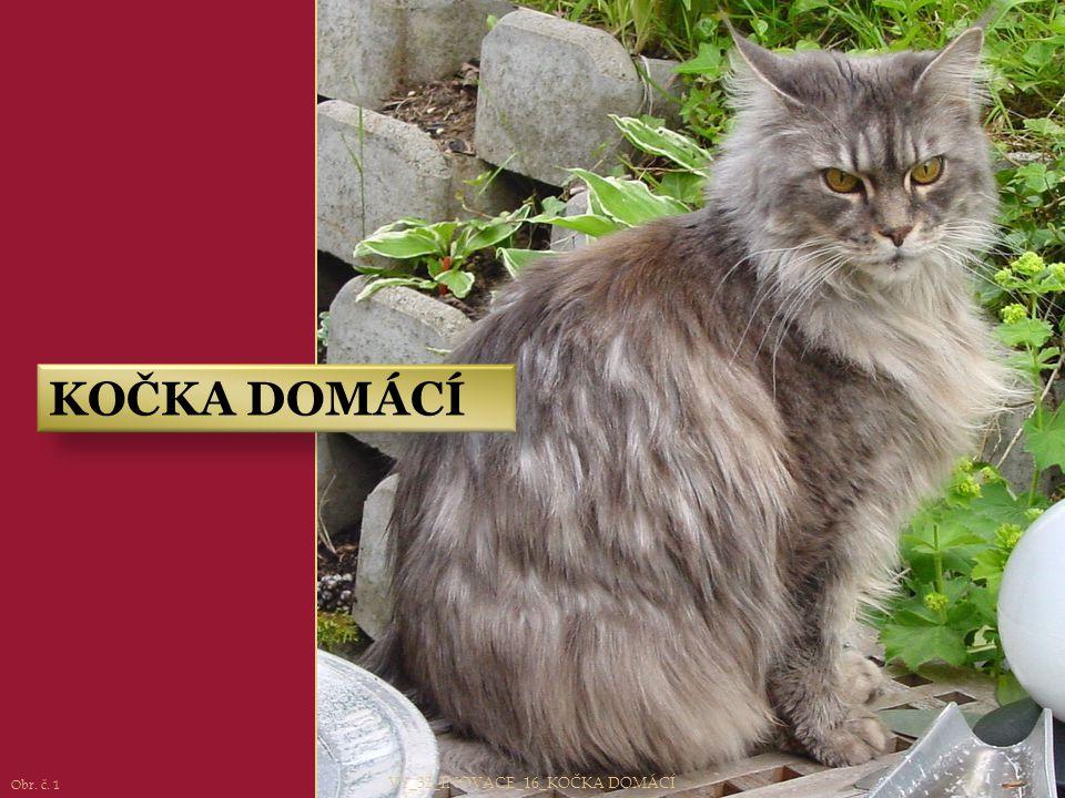 VY_32_INOVACE_16_KOČKA DOMÁCÍ