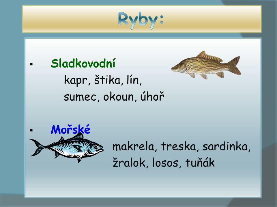 Ryby: Sladkovodní kapr, štika, lín, sumec, okoun, úhoř Mořské
