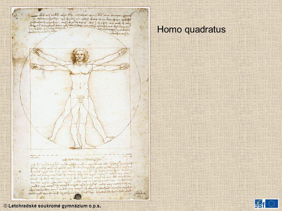 Homo quadratus