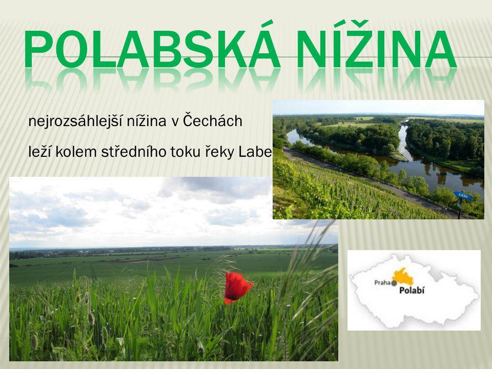 POLABSKÁ NÍŽINA nejrozsáhlejší nížina v Čechách