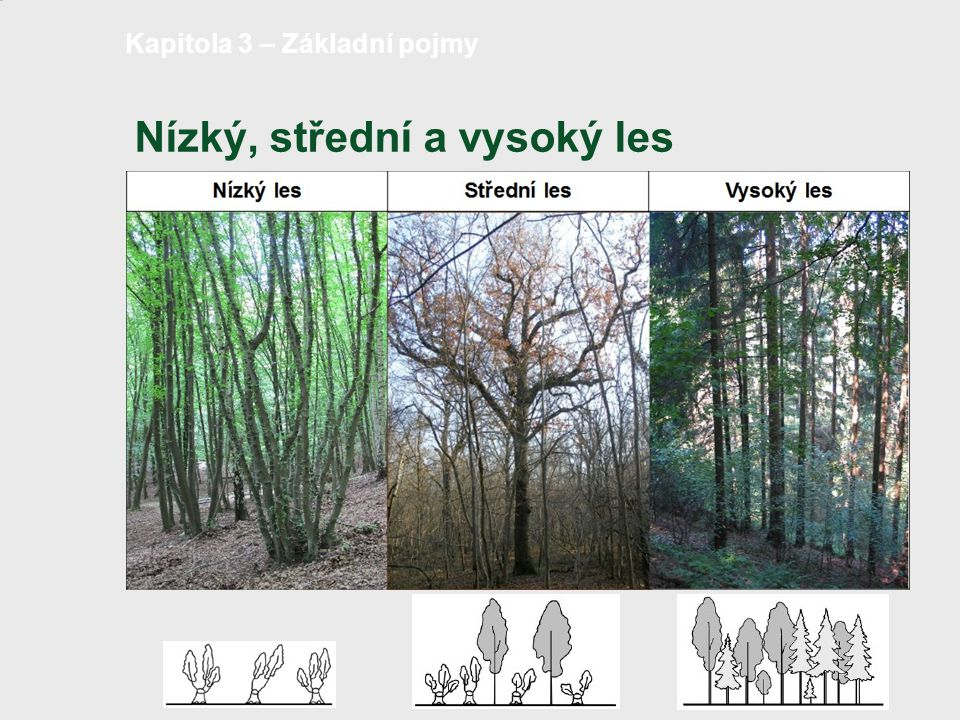 Nízký, střední a vysoký les