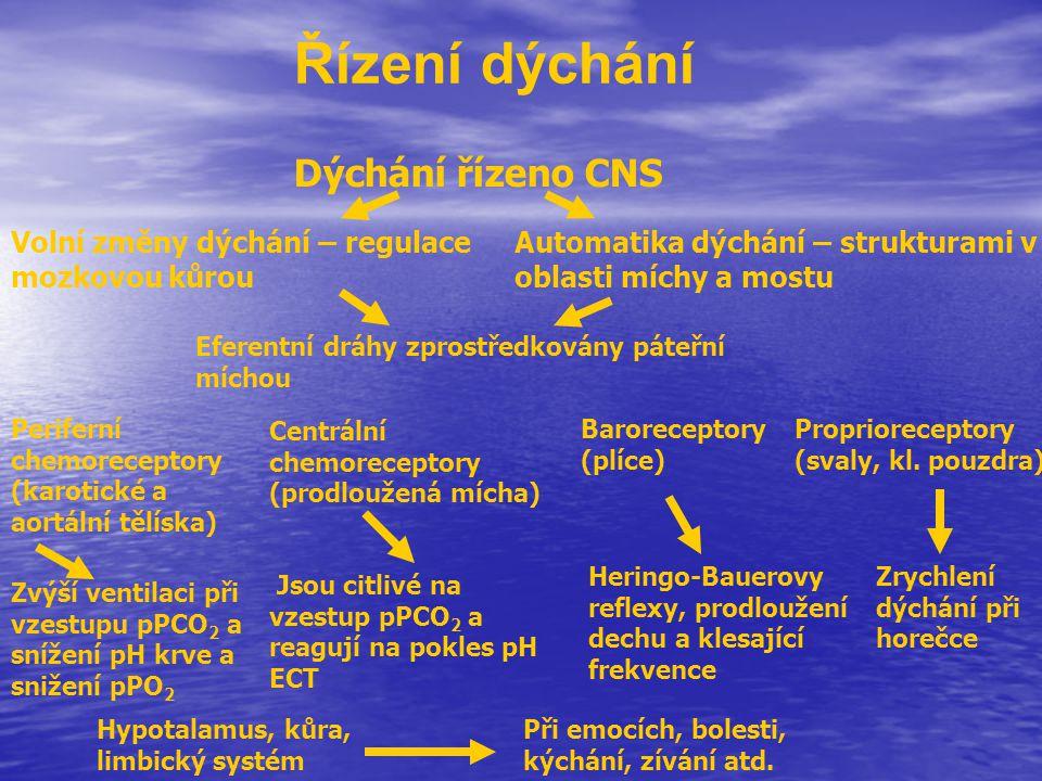 Řízení dýchání Dýchání řízeno CNS