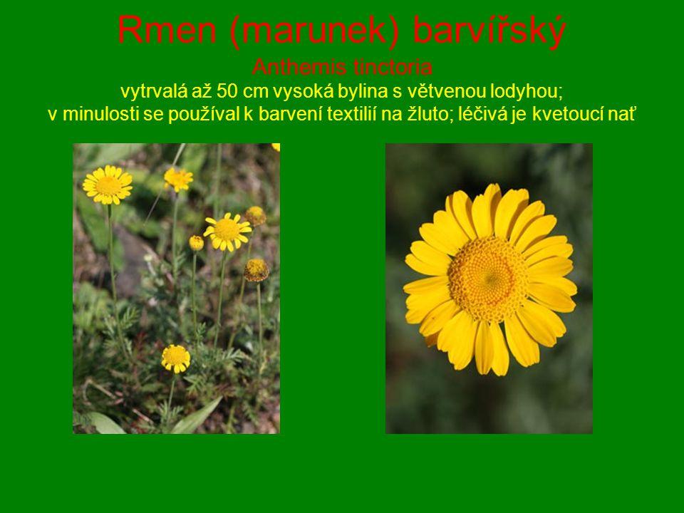 Rmen (marunek) barvířský Anthemis tinctoria vytrvalá až 50 cm vysoká bylina s větvenou lodyhou; v minulosti se používal k barvení textilií na žluto; léčivá je kvetoucí nať