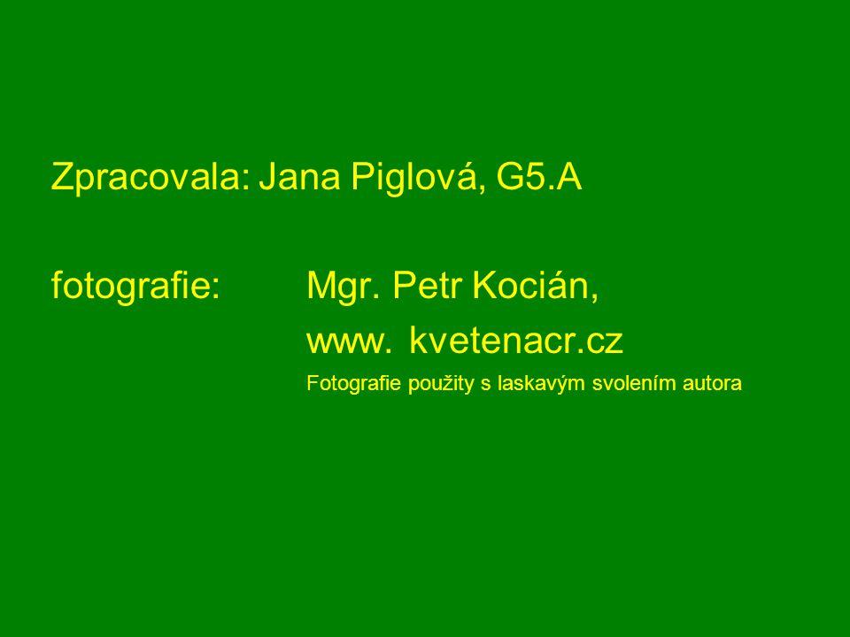 Zpracovala: Jana Piglová, G5.A fotografie: Mgr. Petr Kocián,
