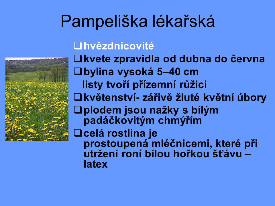 Pampeliška lékařská hvězdnicovité kvete zpravidla od dubna do června