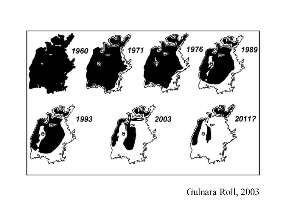 Gulnara Roll, 2003
