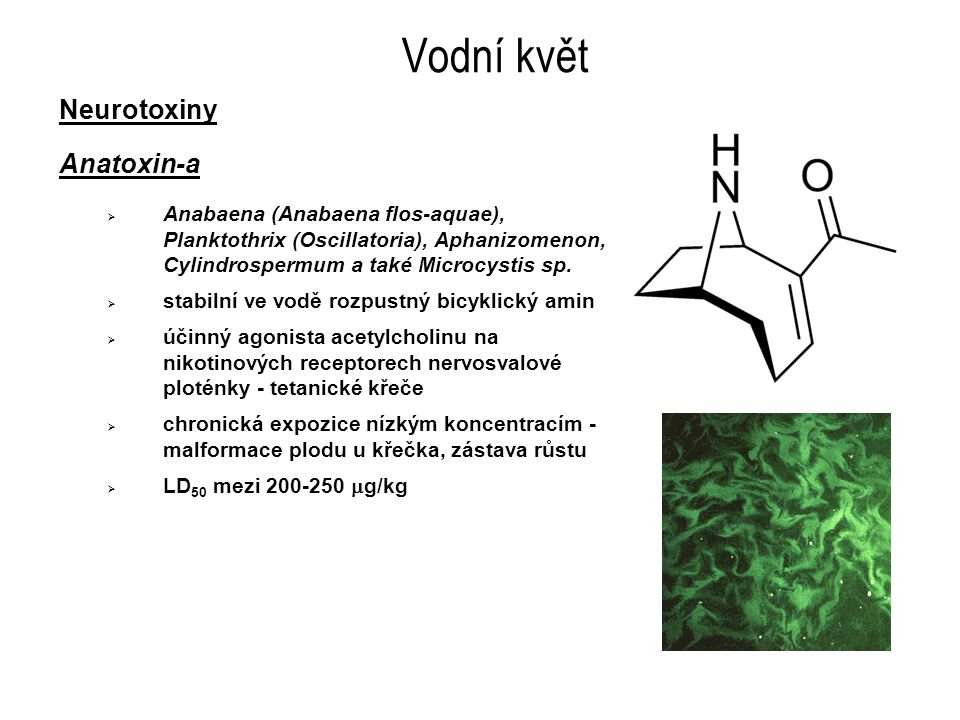 Vodní květ Neurotoxiny Anatoxin-a