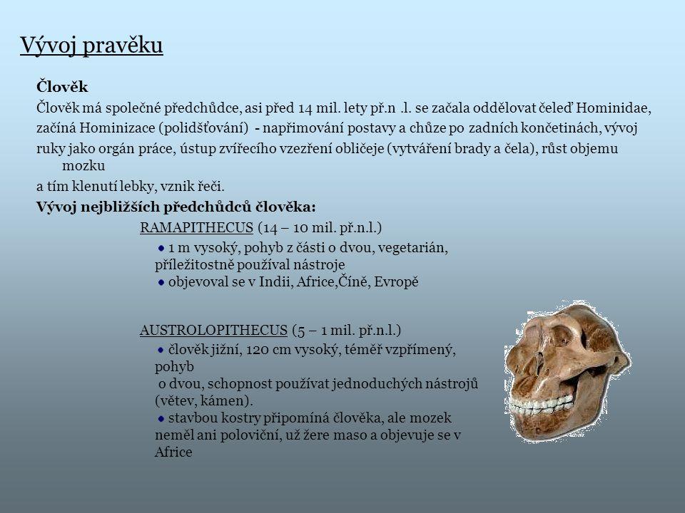 Vývoj pravěku Člověk. Člověk má společné předchůdce, asi před 14 mil. lety př.n .l. se začala oddělovat čeleď Hominidae,