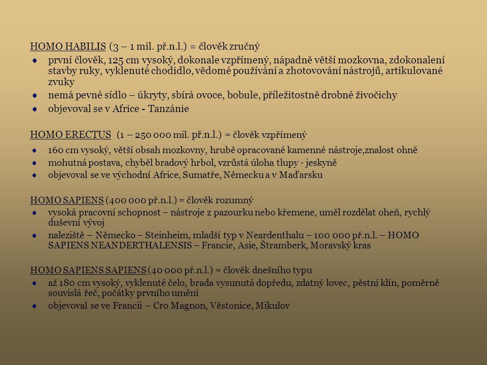 HOMO HABILIS (3 – 1 mil. př.n.l.) = člověk zručný