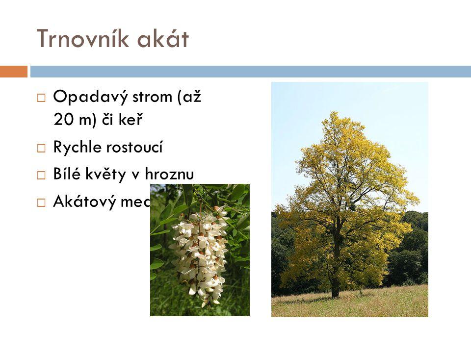 Trnovník akát Opadavý strom (až 20 m) či keř Rychle rostoucí