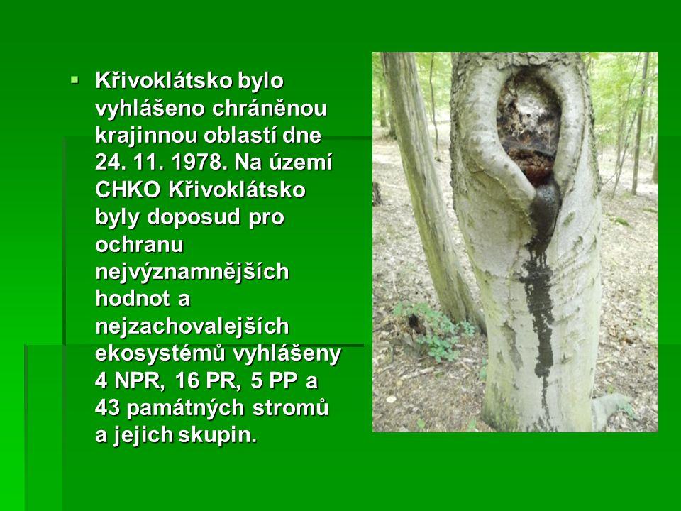 Křivoklátsko bylo vyhlášeno chráněnou krajinnou oblastí dne 24. 11