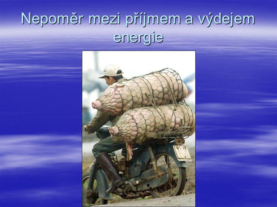 Nepoměr mezi příjmem a výdejem energie